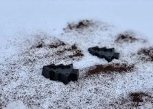 Coffee handmade soap with herbs, trees in the white snow stock photo