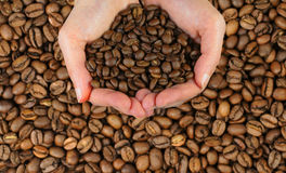 Coffee hands. Two woman  hands holding coffee beans over a coffee beans background Royalty Free Stock Images