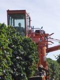 Coffee harvesting Stock Photo