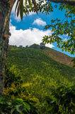 Coffee Hills. A view of the landscape in Colombia's coffee producing region Stock Images