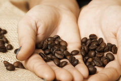 Coffee Imports Stock Photography
