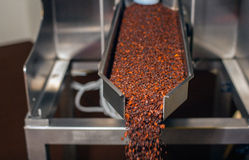 Coffee Industry royalty free stock photography
