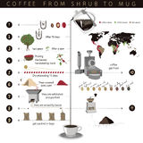 Coffee. This infographic about the cultivation and preparation of coffee Stock Photos