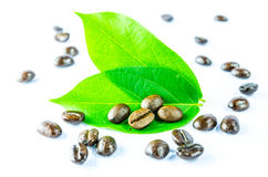 Coffee and leaf Stock Image