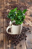 Coffee in a lens mug. Shallow dof. Coffee plant seedling in a mug and coffee beans Royalty Free Stock Images