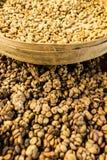 Coffee Luwak. Bali. Royalty Free Stock Image