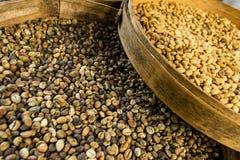 Coffee Luwak. Bali. Stock Image