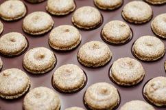 Baked coffee macarons Stock Photos
