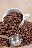 Coffee measuring spoon Royalty Free Stock Photo