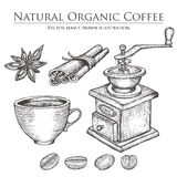 Coffee mill ,bean, seed, fruit, cinnamon, star anise, cup. Hot natural organic caffeine drink set. Hand drawn vector illustration Stock Photos
