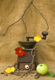 A coffee mill with beans, an apple and a rose Stock Images