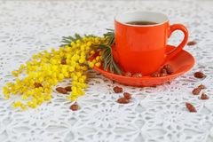Coffee and mimosa Stock Images