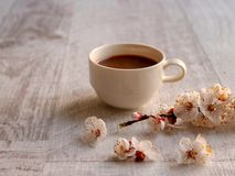 Coffee on a neutral background with apricot flowers in foreground. Close-up of a cup of coffee on a neutral background. In the foreground are apricot flowers royalty free stock photo