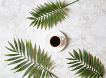 Coffee and palm branches. Cup of black espresso on a white creative concrete background. Rest in warm tropical countries Stock Image