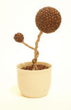 Coffee plant art. Abstract handmade creation made from coffee beans Stock Photo