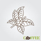 Coffee plant concept. Coffee tree. Coffee branch royalty free illustration