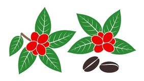 Coffee plant. Isolated coffe beans on white background. EPS 10. Vector illustration Royalty Free Stock Photos