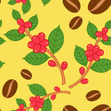 Coffee plant pattern. Stock Photos