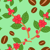 Coffee plant pattern. Stock Photography