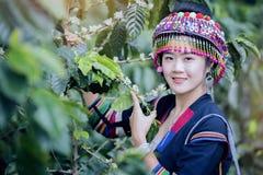 Free Coffee Plantation Stock Image - 108104921