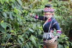 Free Coffee Plantation Royalty Free Stock Photos - 108105158