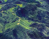 Coffee plantation in Colombia from air royalty free stock image