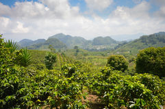 Coffee plantations in the highlands of western Honduras by the Santa Barbara National Park. Beautiful landscapes of coffee plantations in the highlands of Stock Photography