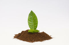 Coffee powder with leaf. Coffee powder on a white background Royalty Free Stock Images