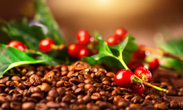 Coffee. Real coffee plant on roasted coffee background. Border art design Stock Image