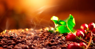 Coffee. Real coffee plant on roasted coffee background. Border art design Stock Photo