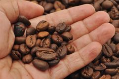 Coffee Roaster. Brown Coffee Roaster royalty free stock photography