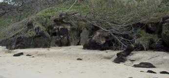Coffee Rocks, Fraser Island Stock Image