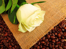Coffee and rose. Rose on a background of burlap and coffee Royalty Free Stock Photo
