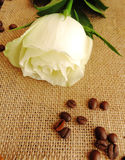Coffee and rose. Rose on a background of burlap and coffee Stock Images