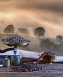 Coffee with scale and coffee beans. Royalty Free Stock Photography