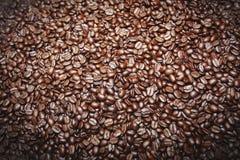 Coffee seed Stock Image