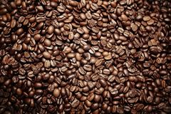 Coffee seed Stock Images