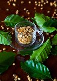 Coffee Seed in the cup. Fresh coffee seed in the cup is ready to grind Royalty Free Stock Photography