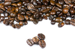 Coffee seed Royalty Free Stock Photography