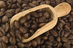 Coffee seeds Royalty Free Stock Photo