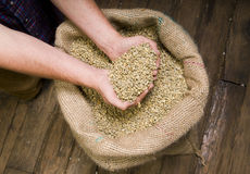 Coffee Seeds Beans Bulk Burlap Bag Sack Stock Image