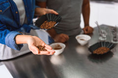Coffee seeds at hand of woman Stock Image