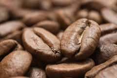 Coffee seeds Royalty Free Stock Images