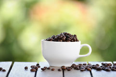 Coffee seeds with white cup and nice bokeh blur background. Stock Photography