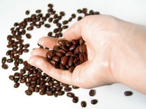 Coffee Series 3. A hand holding a scoopful of coffee beans, hand and beans in focus. Other beans scattered in the background Stock Photography