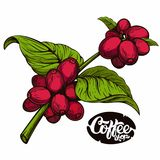 Coffee shop logo. Coffee tree branch with beans and coffee shop logo Royalty Free Stock Photo