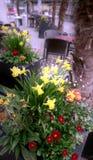 Coffee shop med blom- garnering royaltyfri foto