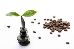 Coffee spa Royalty Free Stock Photography