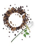 Coffee Stains of Coffee Cup and White Rose Stock Images