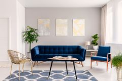 Coffee table with open book and tea mug standing on carpet in real photo of bright sitting room interior with fresh plants, gold c. Hair and navy blue lounge royalty free stock images